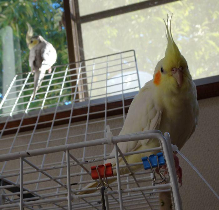 f:id:birdcrown:20190115182552j:plain
