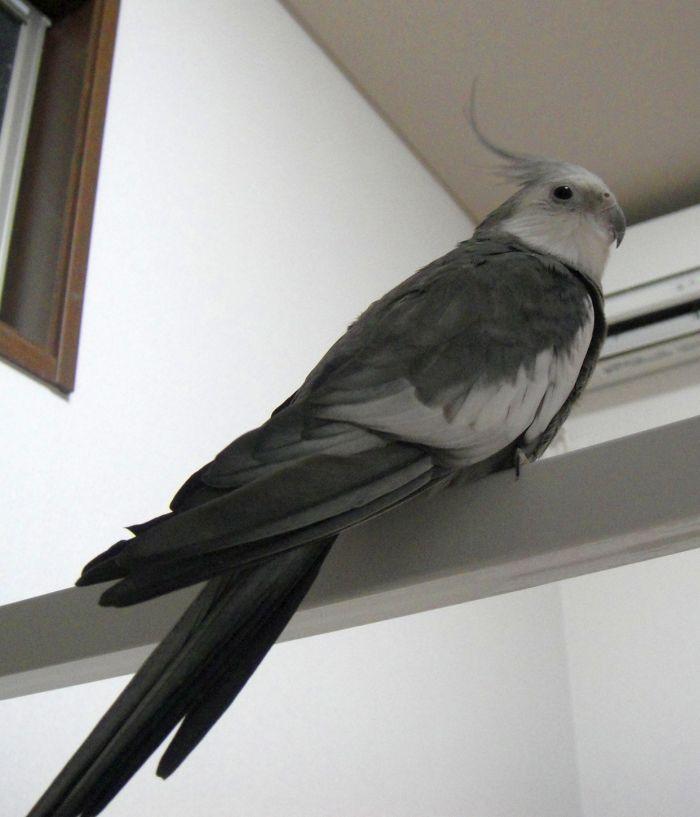 f:id:birdcrown:20190115183622j:plain