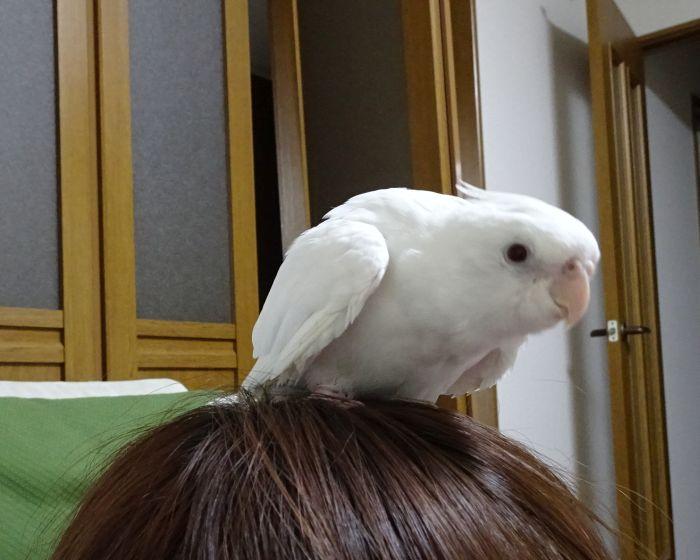 f:id:birdcrown:20190117133943j:plain