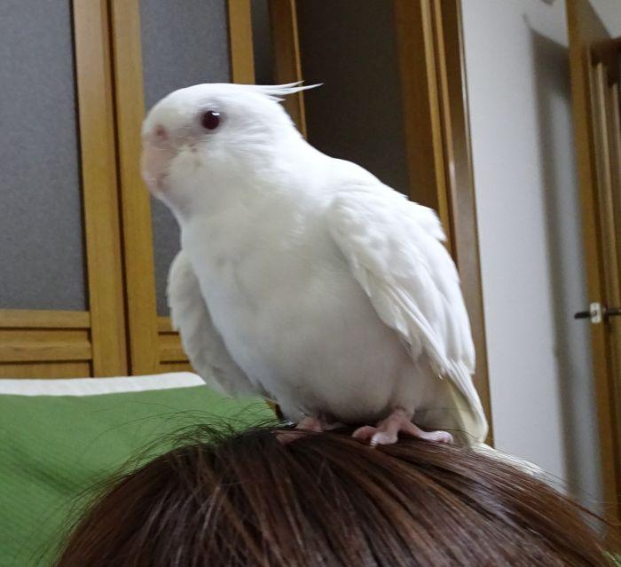 f:id:birdcrown:20190117134509j:plain