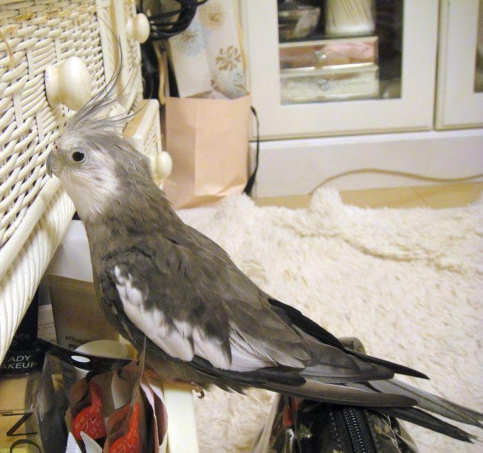 f:id:birdcrown:20190131150825j:plain