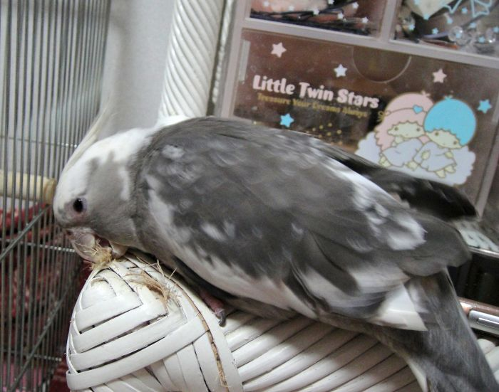 f:id:birdcrown:20190131154313j:plain