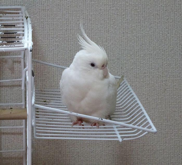 f:id:birdcrown:20190131155617j:plain