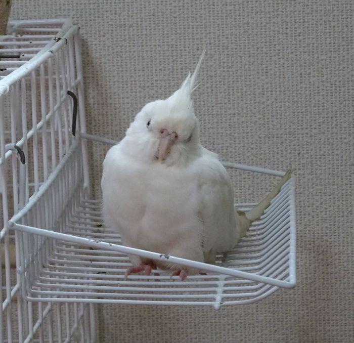 f:id:birdcrown:20190131160530j:plain