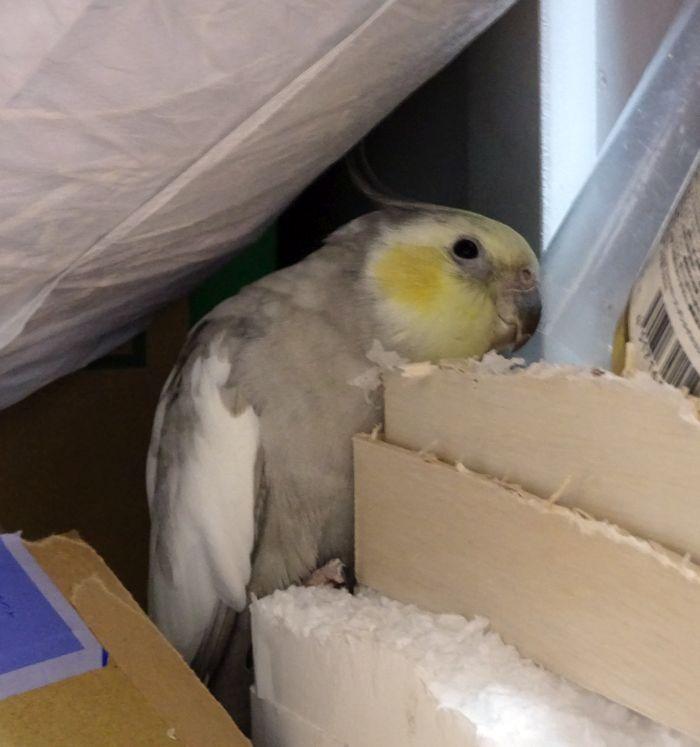 f:id:birdcrown:20190202153058j:plain