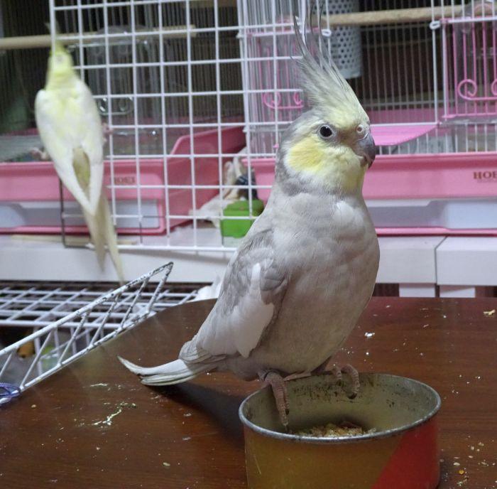 f:id:birdcrown:20190204220652j:plain