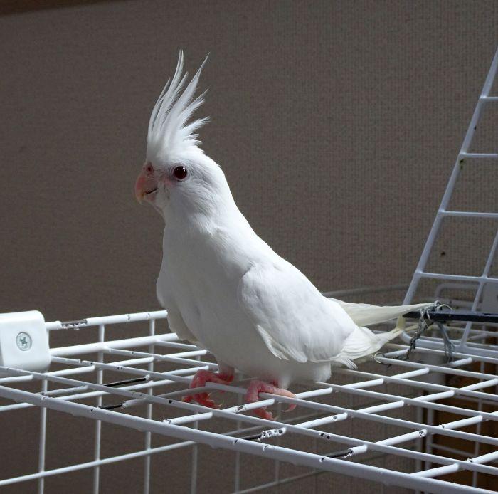 f:id:birdcrown:20190205183944j:plain