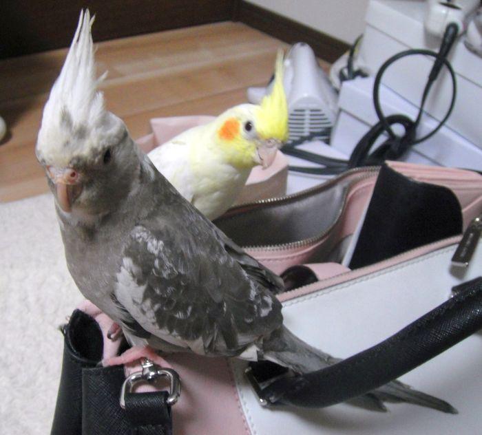 f:id:birdcrown:20190207170222j:plain