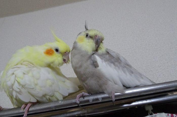 f:id:birdcrown:20190208202841j:plain