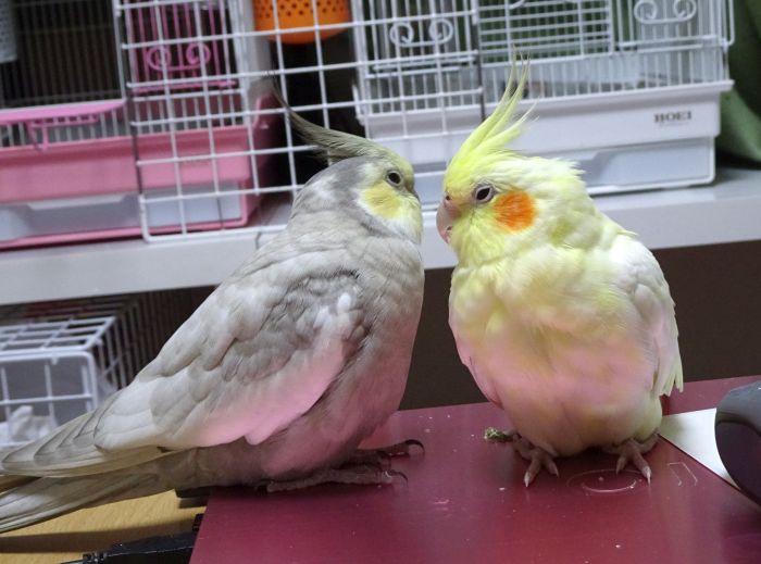 f:id:birdcrown:20190208213849j:plain
