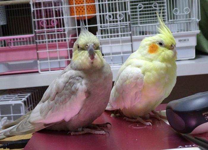 f:id:birdcrown:20190208214655j:plain