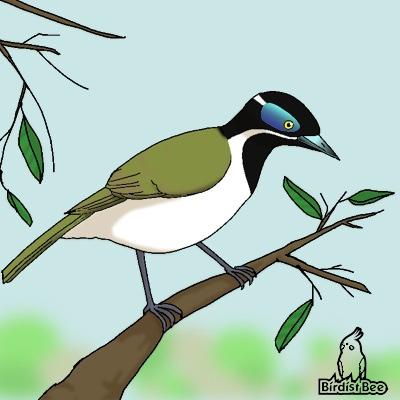 f:id:birdistbee:20170617215848j:plain