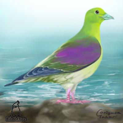 f:id:birdistbee:20170617222433j:plain