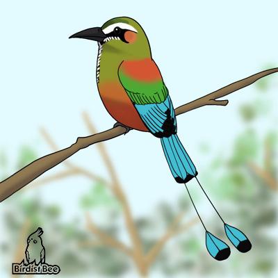 f:id:birdistbee:20170618135851j:plain