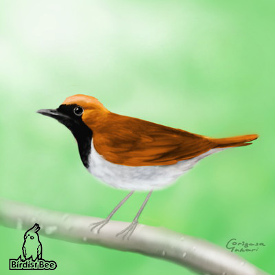 f:id:birdistbee:20170618224306j:plain