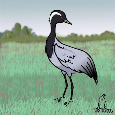 f:id:birdistbee:20170619205252j:plain