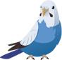 ア行の鳥(イラスト付き)リスト