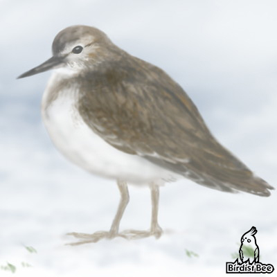 f:id:birdistbee:20170713212217j:plain