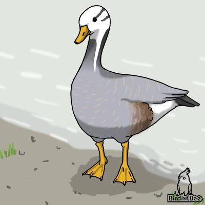 f:id:birdistbee:20170717231048j:plain