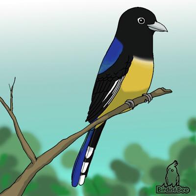 f:id:birdistbee:20170727144750j:plain
