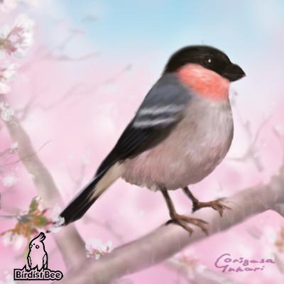 f:id:birdistbee:20170728144858j:plain