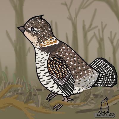 f:id:birdistbee:20170818225030j:plain