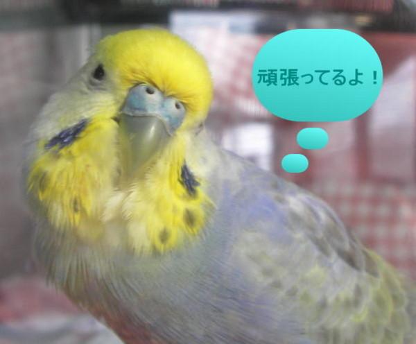 f:id:birdland2:20090201033839j:image