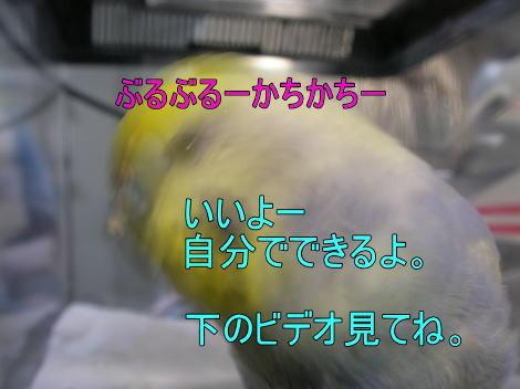 f:id:birdland2:20090209004513j:image