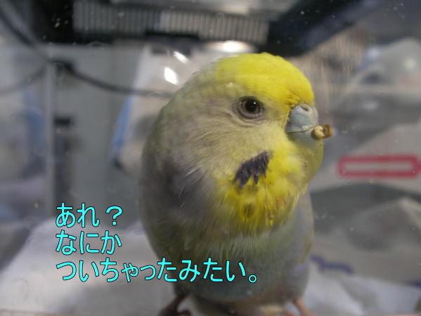 f:id:birdland2:20090209004516j:image