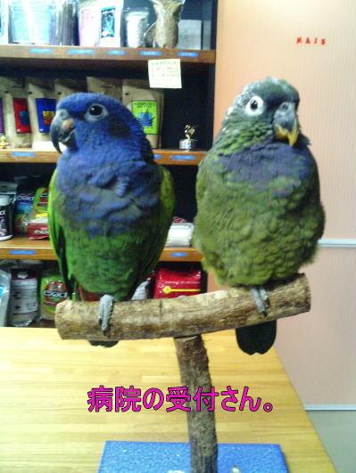 f:id:birdland2:20090308024204j:image