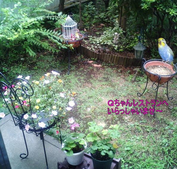 f:id:birdland2:20090908022510j:image