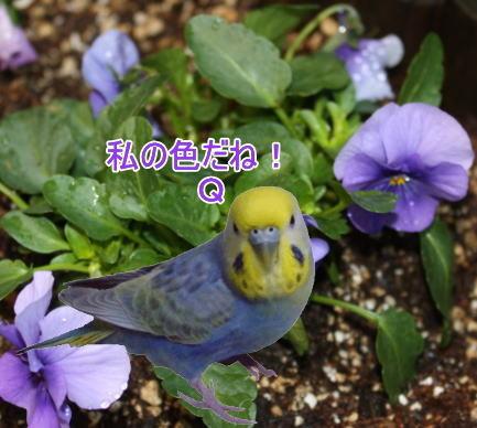 f:id:birdland2:20100205234932j:image
