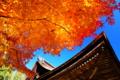 京都新聞写真コンテスト~国宝と燃えるような紅葉