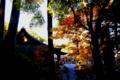京都新聞写真コンテスト~斜陽紅葉湖南三山常楽寺
