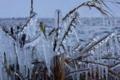 京都新聞写真コンテスト 『寒波襲来~びわ湖しぶき氷』