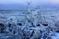 京都新聞写真コンテスト 『寒朝の造形~琵琶湖飛沫氷』