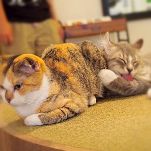 猫画像,猫写真,猫カフェ写真,猫カフェ画像,MoCHAラウンジ池袋東口店,猫カフェ「MoCHA(モカ)」,池袋猫カフェ,猫カフェモカ,猫カフェ池袋