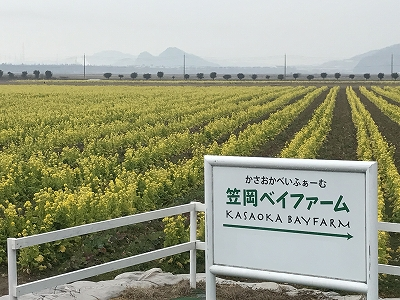 f:id:bizenwakakusa:20170217101006j:plain