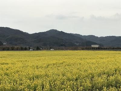 f:id:bizenwakakusa:20170313115540j:plain