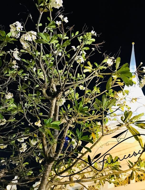 f:id:bkkfran:20190220100237j:image