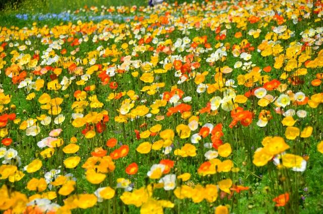きれいな花畑