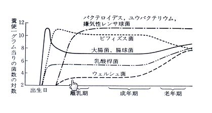 世代別腸内細菌数を示すグラフ