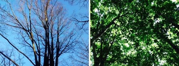 枯れ木と若木の対比
