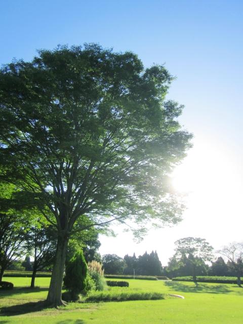 日光を燦燦と浴びる大木