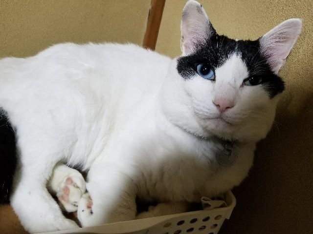 f:id:black-giant-kitty:20180502201028j:image