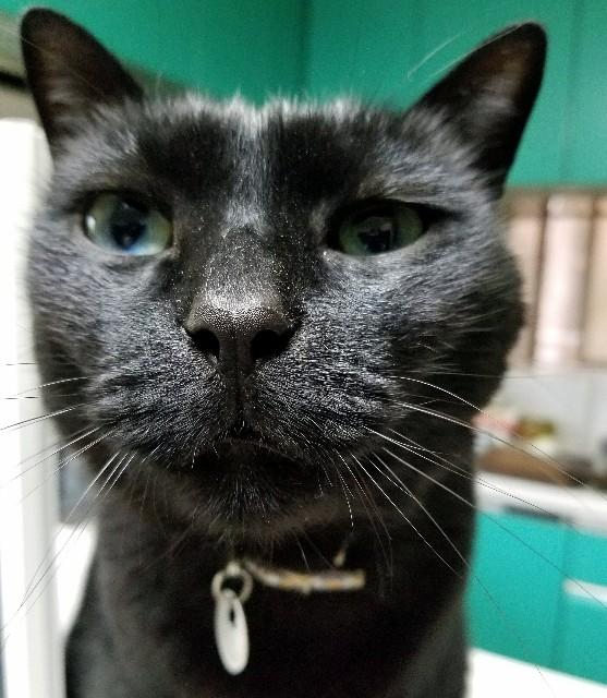 f:id:black-giant-kitty:20180507081954j:image