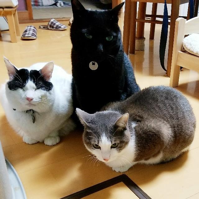 f:id:black-giant-kitty:20180510185658j:image
