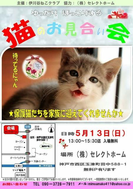 f:id:black-giant-kitty:20180513081010j:image