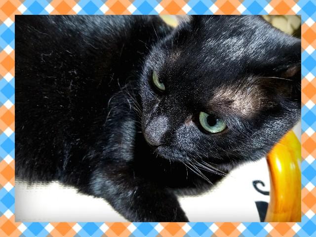 f:id:black-giant-kitty:20180526213450j:image