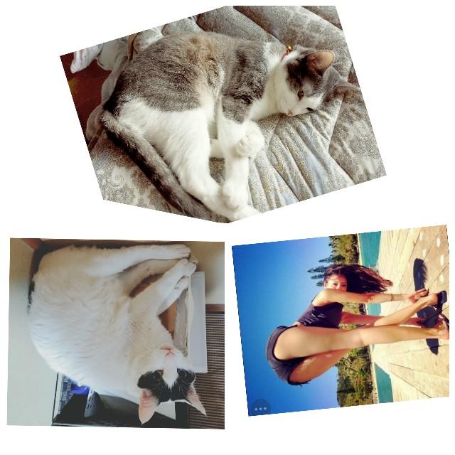 f:id:black-giant-kitty:20180605080655j:image